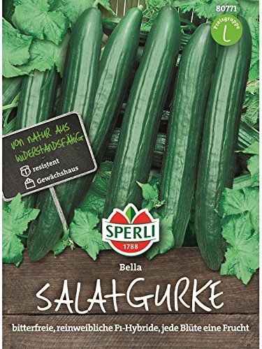 Gurke Salatgurke Bella F1 rein weiblich -