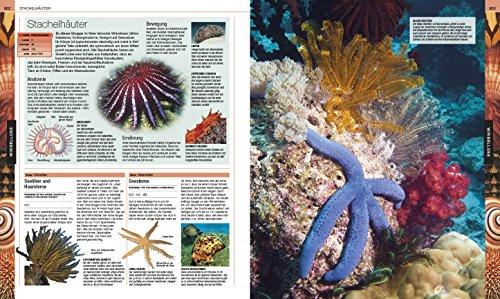 Tiere: Die große Bild-Enzyklopädie mit über 2.000 Arten - 9