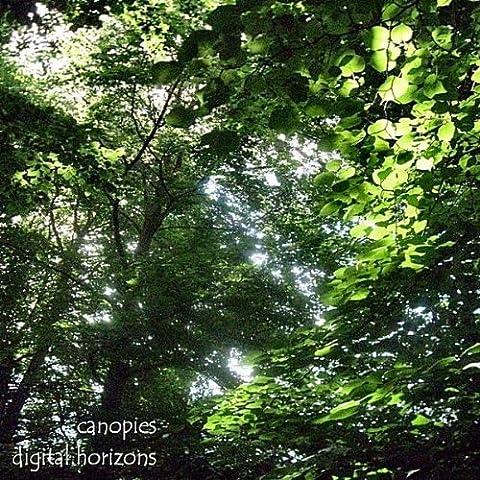 Canopies, Pt.
