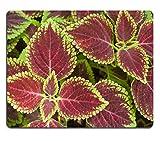 MSD Naturkautschuk Mousepad Bild-ID: 32049877Rose mit Wasser Drops Macro Shot mit geringe Tiefenschärfe Farbe straffen Bild 3064