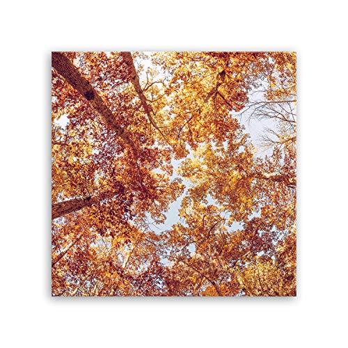 Bilderdepot24 hochwertiges Leinwandbild - Serie Baum - treetop - Baumkrone - 50 x 50 cm einteilig 3141B D -