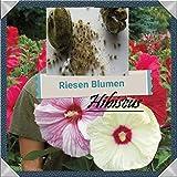25x GIGANTE ibisco fiori seme semi di fiori Eye-catcher PIANTA GIARDINO rarità SEMI FIORE COLORATO NUOVO #60