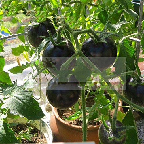 NOIR Graines de tomate très savoureux bruyère Nutritive légumes semences 30 pcs / pack Graines Jardin Bonsai Fleur