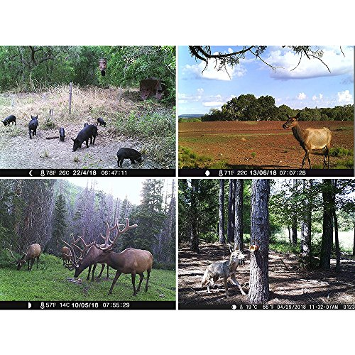 Trigger speed matters when you are trying to get a shot while the animal is in motion. The central sensor works at about 0.6 seconds while the side sensor reduces the time to 2 seconds. The camera is able to capture 3 shots per detection allowing you to capture every precious second of the sighting.