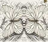 Butterflies Fly in Pairs -