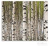 Wallario Herdabdeckplatte / Spritzschutz aus Glas, 2-teilig, 60x52cm, für Ceran- und Induktionsherde, Birkenwald - Baumstämme in schwarz weiß