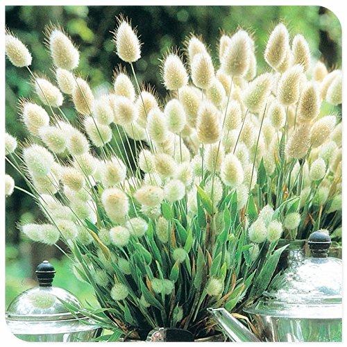 Ahuyentadores de mosquitos Grass 200PCS Mozzie Sweetgrass Buster. Jardín y la planta de los bonsais Inicio. Planta de interior fácil de siembra