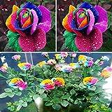 Rosepoem 600pcs bunter Regenbogen-Blumensamen Garten Pflanzen Multi-Color Einzigartige Liebhaber