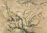 LuxHomeDecor Vincent Van Gogh Mandelblüte Beige 70 x 50 cm Bild auf Holzplatte MDF Rand Schwarz