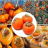 20/50pcs Seltene japanische Persimmon Obstbaum Bonsai Samen, Kaki Baum Samen Diospyros Kaki Frucht Samen Haus Garten Pflanzen