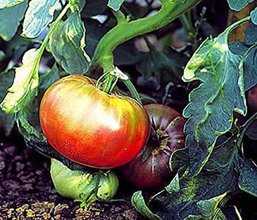 Tomate, Schwarze von der Krim (Saatgut)