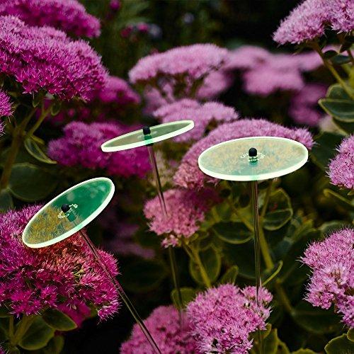 Cazador-del-sol Lot de soleil Bouquet – Vert