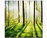 Berger Designs - Bild auf Leinwand als Kunstdruck 40 x 40 cm. Wandbild Wald Sonnenuntergang. Beste Qualität aus Deutschland