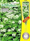 Bärlauch 'Allium ursinum' würzig gesund attraktiv ( mit Stecketiket) Gewürzpflanze, Aromapflanze
