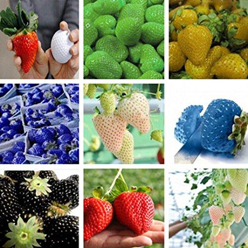 Galleria fotografica 10pcs / bag da giardino piante organiche arachidi semi, semi di ortaggi e anche i semi della frutta