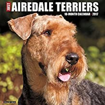 Just Airedale Terriers 2017 Wall Calendar by Willow Creek Press (2016-07-06)