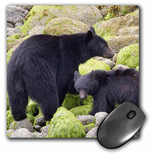 3drose-llc-8-x-8-x-025-inches-mouse-pad-black-bear-mother-with-there-cub-walks-the-beach-at-low-tide