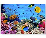 Fotografie – Korallenriff im roten Meer - Leinwandbild 120x80cm