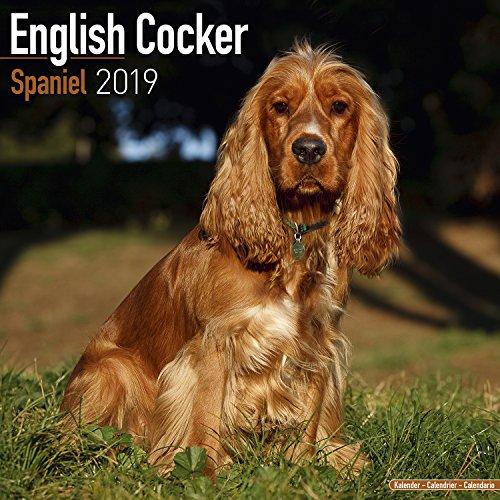 English Cocker Spaniel Calendar 2019 (Square) -