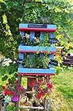 Kräuterregal für drinnen und draußen Blau/Rot
