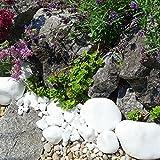 MGS SHOP Marmorkies Snow rein weiß schneeweisser Garten Kies 25 kg (40/80 mm) - 6