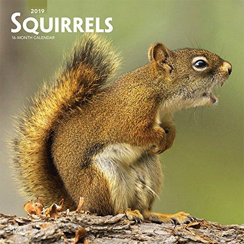 Squirrels - Eichhörnchen - Grauhörnchen 2019 - 18-Monatskalender: Original BrownTrout-Kalender [Mehrsprachig] [Kalender] por Inc. Browntrout Publishers