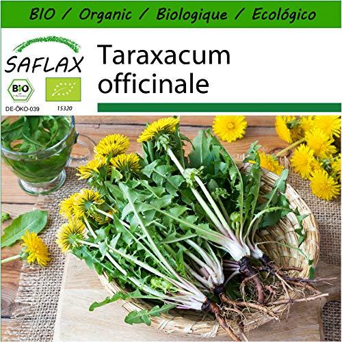 SAFLAX - BIO - Löwenzahn - 400 Samen - Mit keimfreiem Anzuchtsubstrat - Taraxacum officinale