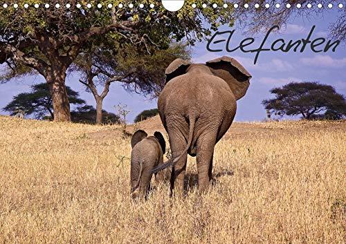 Elefanten (Wandkalender 2020 DIN A4 quer): Die grauen Riesen von ihrer schönsten...