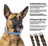 Hundehalsband aus Leder (XL – 46-55cm, Braun) - 5