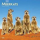 Meerkats - Erdmännchen 2019 - 18-Monatskalender (Wall-Kalender)
