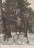 orig. Holzstich Bäumchen mit goldenen Blättern - Landbäume - Wald - Urwald