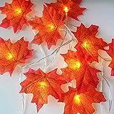 ELINKUME Blätter Lichterketten, 20 LED Maple Leaf Lamp String, Blinken und konstant zwei Modi, Warmes weißes Licht, Batteriebox Power, 3M, IP54 wasserdicht