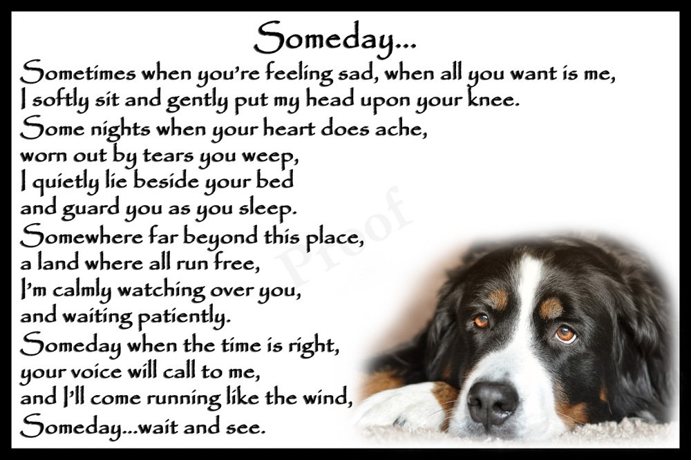 St Bernard Pet Dog Rainbow Bridge Memorial Fridge Magnet – Someday