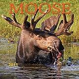 Moose 2018 Square Wall Calendar