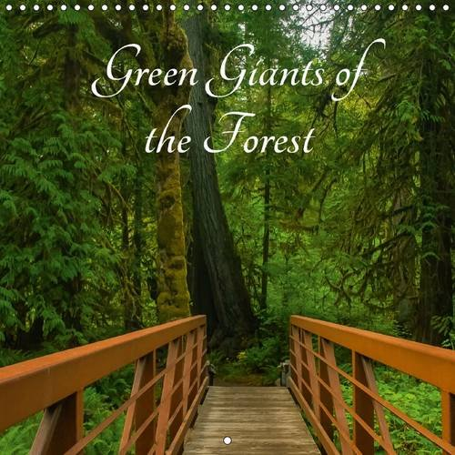 green-giants-of-the-forest-wall-calendar-2017-300-x-300-mm-square-ancient-trees-and-rainforest-on-th