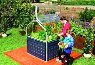 Gewächshaus Hochbeet Anzuchbeet Plant-Inn Plantino Plant Inn CLEAR von Palram - Du und dein Garten