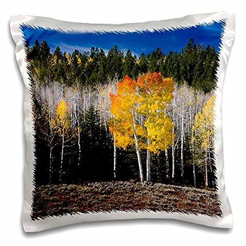 Danita Delimont - Scott T. Smith - Forests - Utah, USA, Aspen trees in autumn. Fish Lake Basin. Fishlake NF. - 16x16 inch Pillow Case (pc_191906_1)