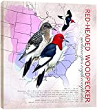 Tree-Free Greetings Árbol de-free Tarjeta de felicitación de 85301 11,25 x 28,58 cm Red-pelador con cabezal Woodpecker Por Roger Peterson ecoarte con texto en inglés