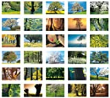Bäume /Trees /Des Arbres: Postkartenbuch -