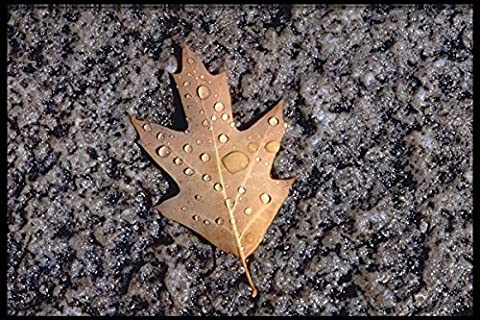 423040 Red Oak Leaf And Water Droplets A4 Photo Poster Print 10x8
