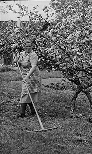 vintage-photo-of-elsa-malman-raking-lawns-during-the-flowering-apple-trees-on-litselas-sheriff-farm