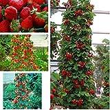 Aprettysunny 100pcs semi di fragola rampicante rampicante pianta da frutto decorazione del giardino delizioso