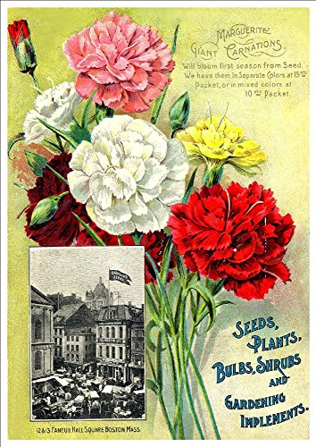 wwrawson-co-marguerite-giant-carnations-c1890s-a4-glossy-art-print-taken-from-a-beautifully-illustra