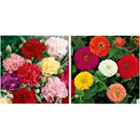 Kraft Seeds Zinnia Dahlia Flowers Mix GMO-free Seeds (Multicolour) & Carnation Mix Flower Seeds with Agropeat (Multicolor, Pack of 2) Combo