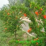 Grande vendita 20pcs / lot, bonsai melograno semi Delicious Seeds frutto molto dolce, semi succulente albero