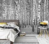 awallo Fototapete – Motiv «Birkenwald» in Grau, Schwarz, Weiß | 336x260cm | XXL Bild-Tapete Wand-Bild Digitaldruck | hochwertige Vliestapete – Made in Germany | einfache Verarbeitung