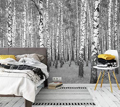 awallo Fototapete – Motiv «Birkenwald» in Grau, Schwarz, Weiß   336x260cm   XXL Bild-Tapete Wand-Bild Digitaldruck   hochwertige Vliestapete – Made in Germany   einfache Verarbeitung