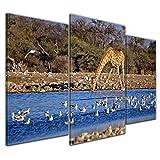 Kunstdruck - Giraffe im Etosha National Park - Namibia - 100x60 cm 3 teilig - Bilder als Leinwanddruck - Wandbild von Bilderdepot24 - Tierwelten - Afrika - Wildtier - Giraffe an einer Wasserstelle