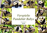 Pandabär Babys (Wandkalender 2020 DIN A4 quer)