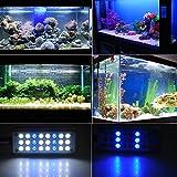COSANSYS LED Aquarium Beleuchtung, Aquarien Fische Tank Beleuchtung18 Weiße+ 6 Blaue 24Leds 1.5W LED Aquarium Klemmleuchte Lampe Licht für Aquarien Fish Tank